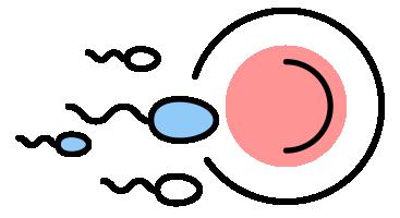 spermienqualität-verbessern-voraussetzungen